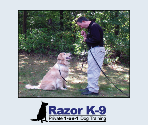 razork9-private-dog-training-birmingham-mi