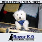 how-to-potty-train-a-dog